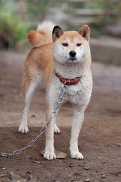 『ひまわりと子犬の7日間』の主演犬イチ(ひまわり)がお客様をお見送りします!